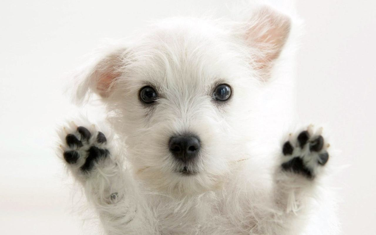 Cute Puppy Wallpaper 43 Wallpapers – Adorable Wallpapers