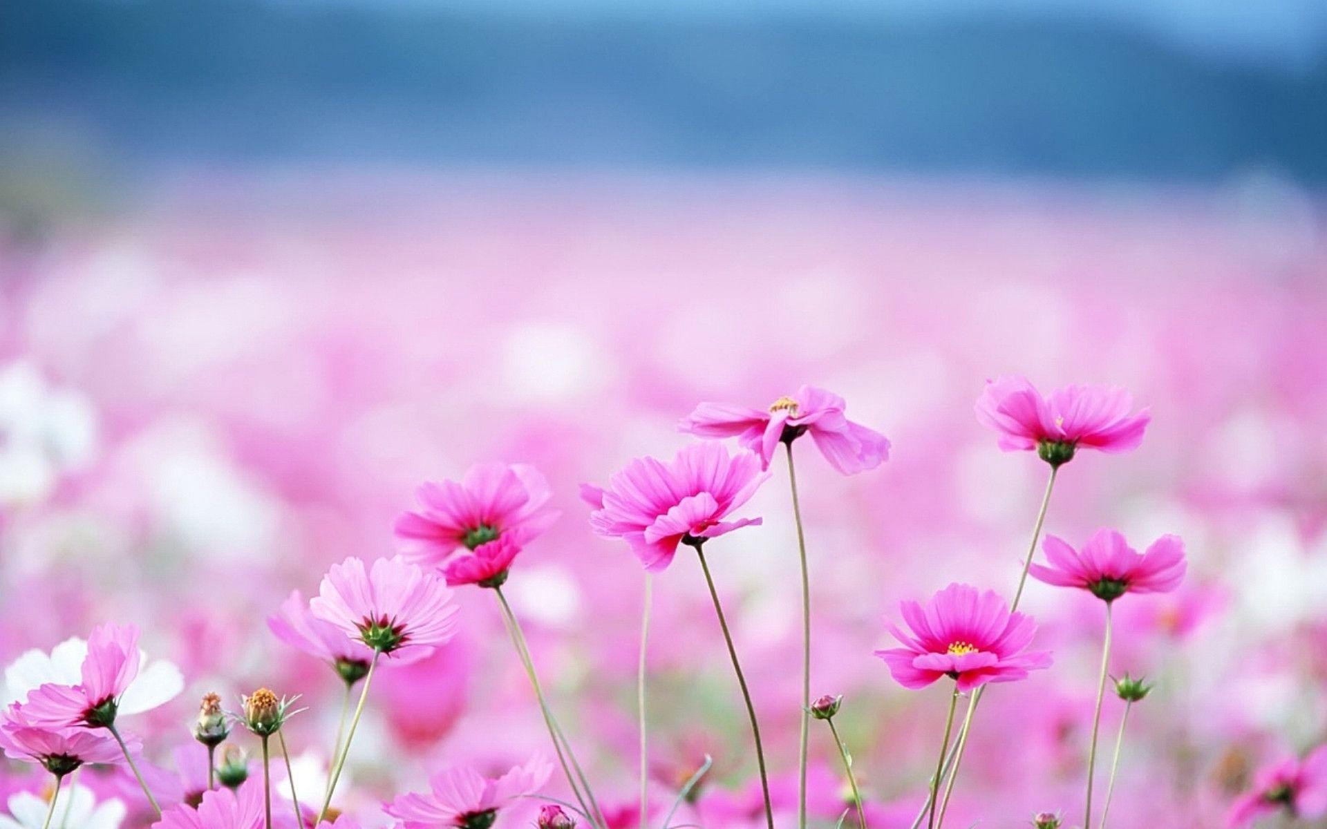 desktop flower backgrounds 53 wallpapers
