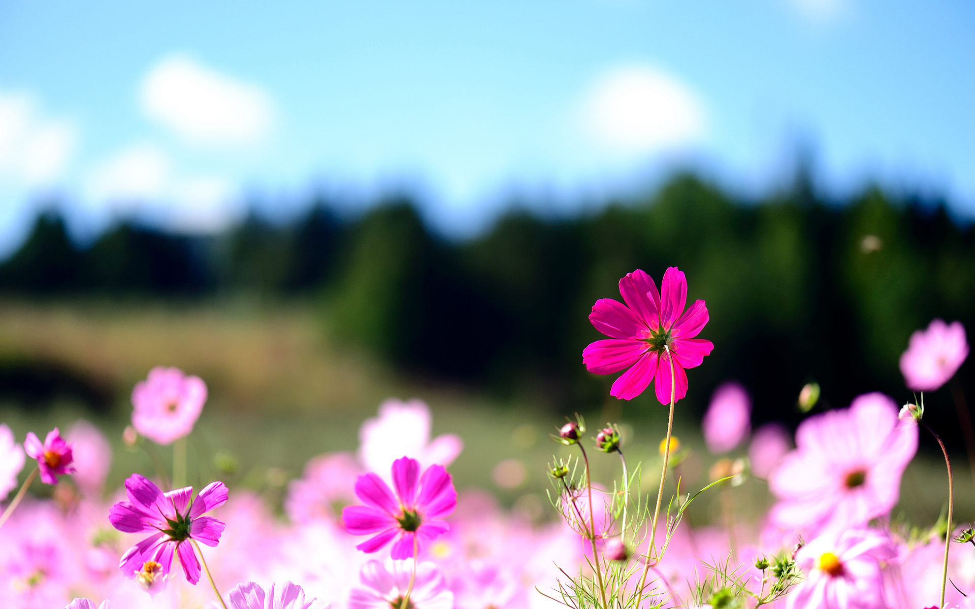 Backgrounds Flower Desktop With Free Wallpaper Nature Flowers 1920x1200