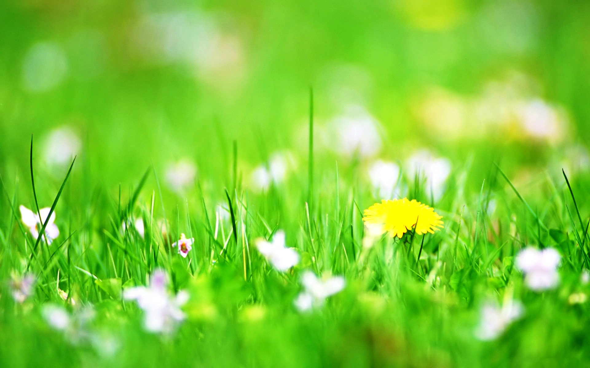 desktop flower backgrounds 52 wallpapers � adorable