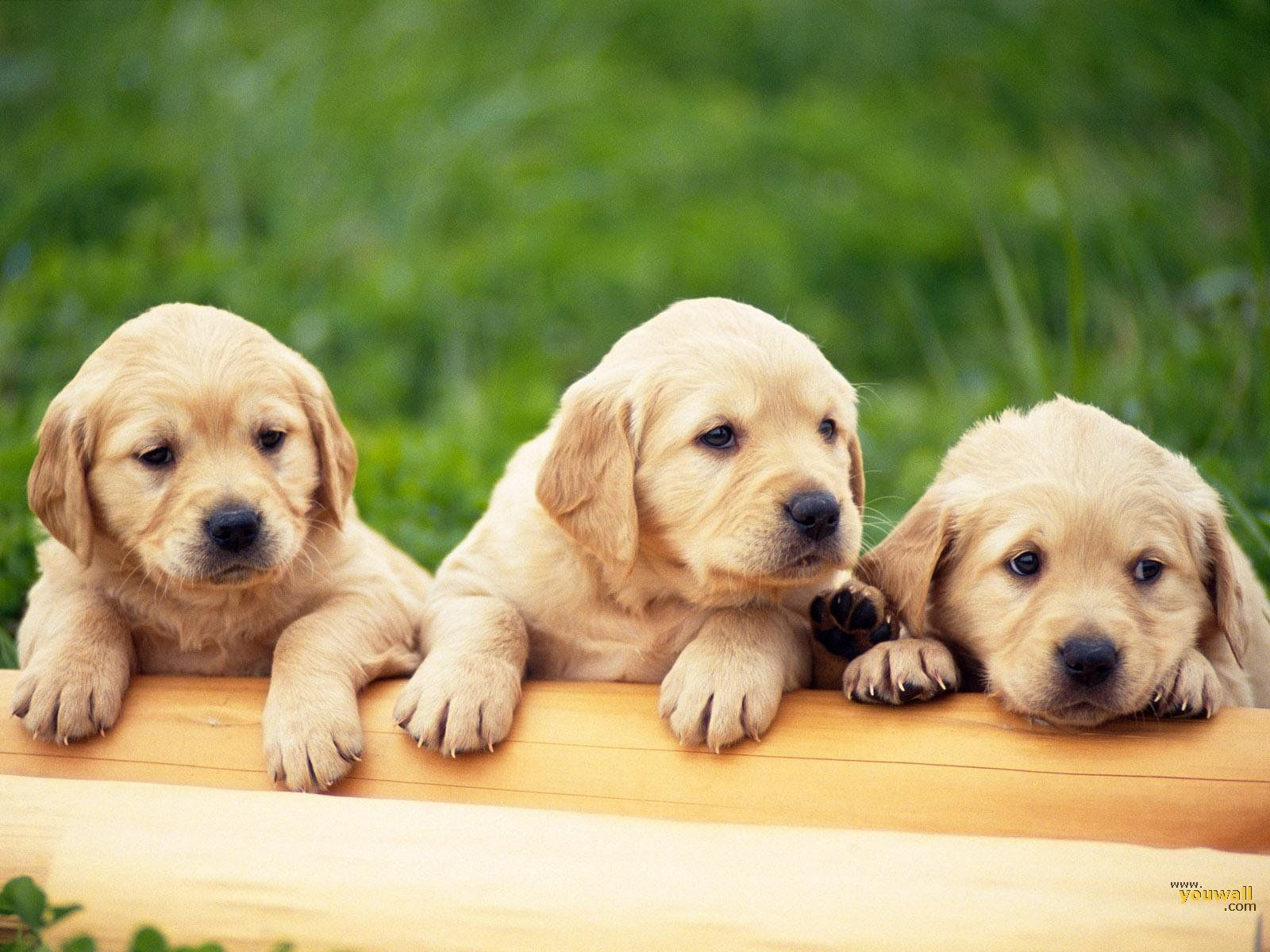 Cute Dog Breeds Wallpapers New