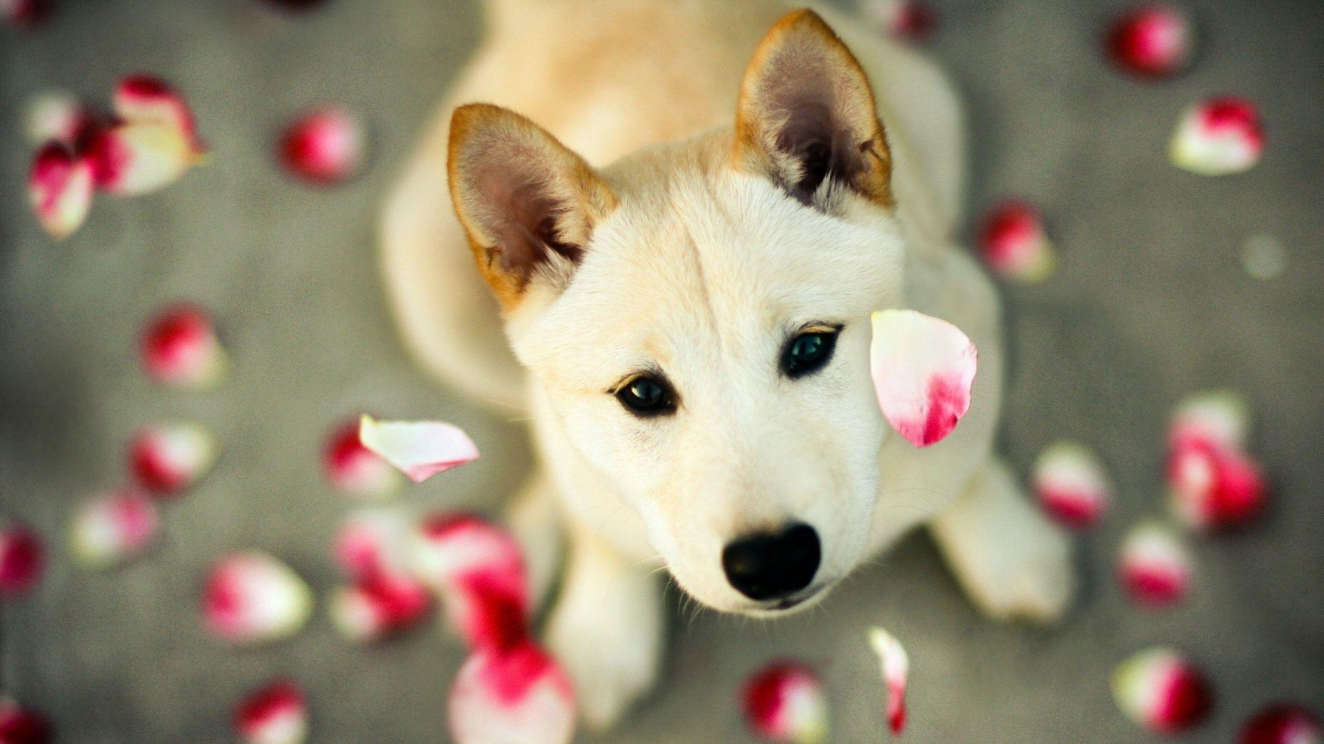 dogs wallpapers (42 wallpapers) – adorable wallpapers