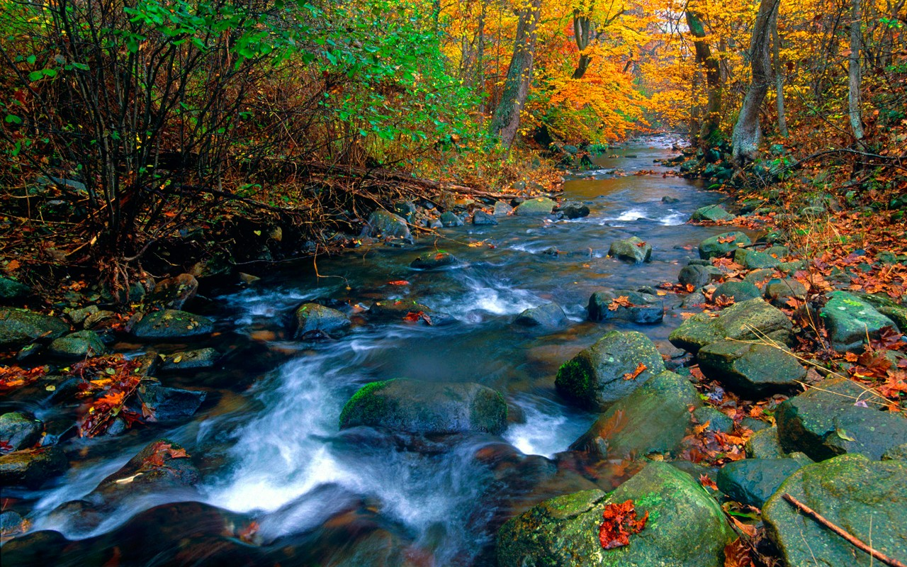 Free D Nature Live HD Wallpaper APK Download For Android GetJar 1280x800
