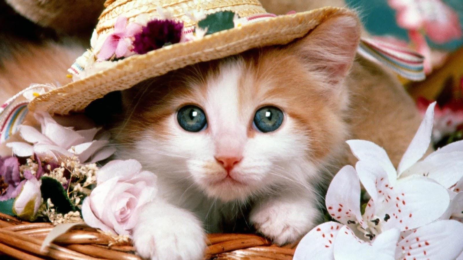 Gambar Kucing Full godean.web.id