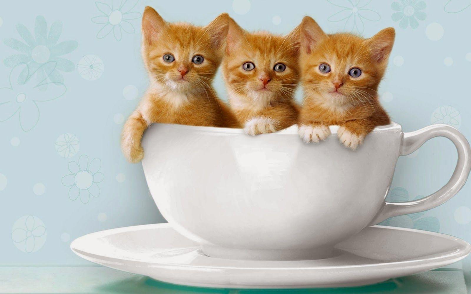 Download wallpaper Kucing Lucu6