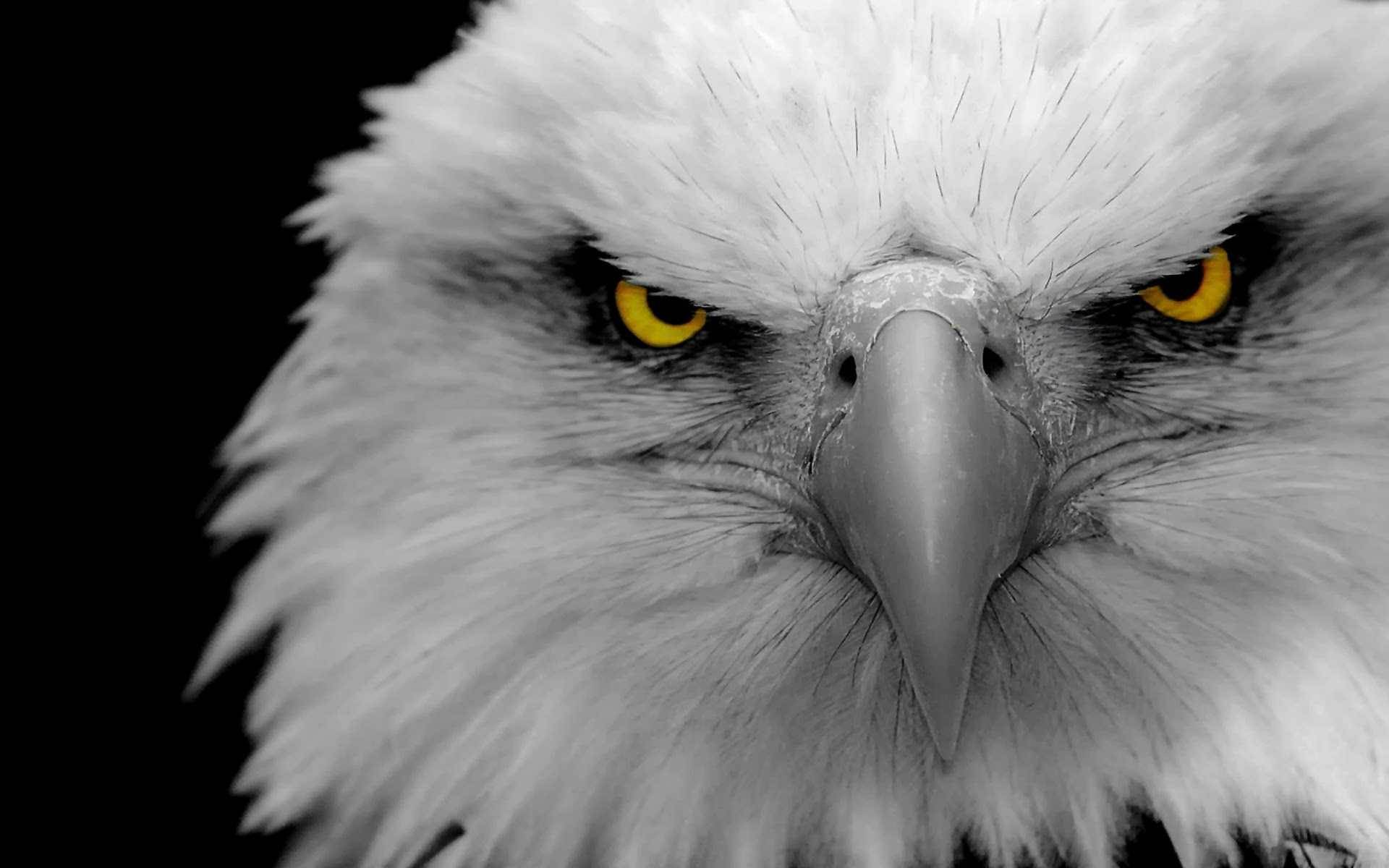 Eagle Wallpapers 1920x1200