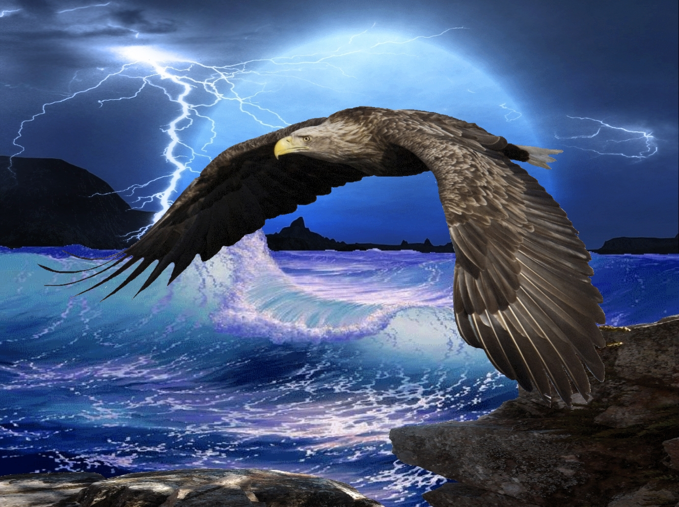 Eagle HD Wallpapers  Backgrounds  Wallpaper  1333x996