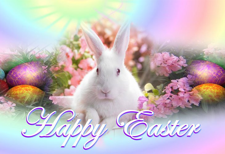 Easter HD Wallpapers  Backgrounds  Wallpaper  730x500