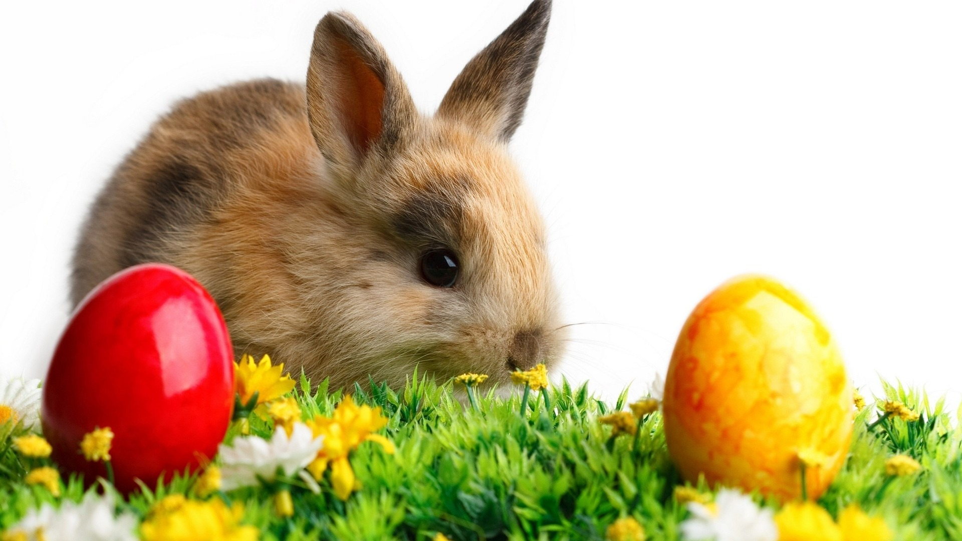 Free Hd Easter Wallpapers  Happy Easter  1920x1080