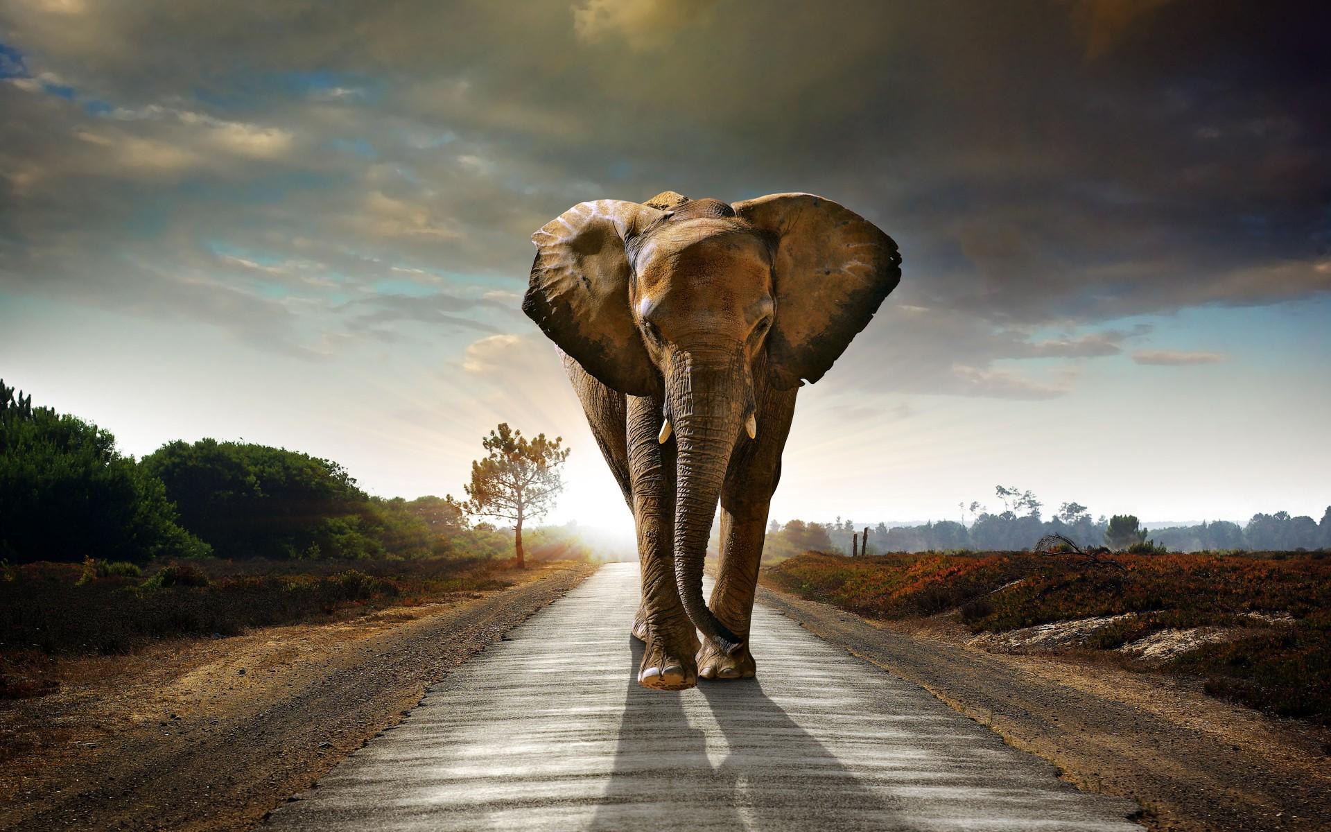 elephant backgrounds for desktop 37 wallpapers