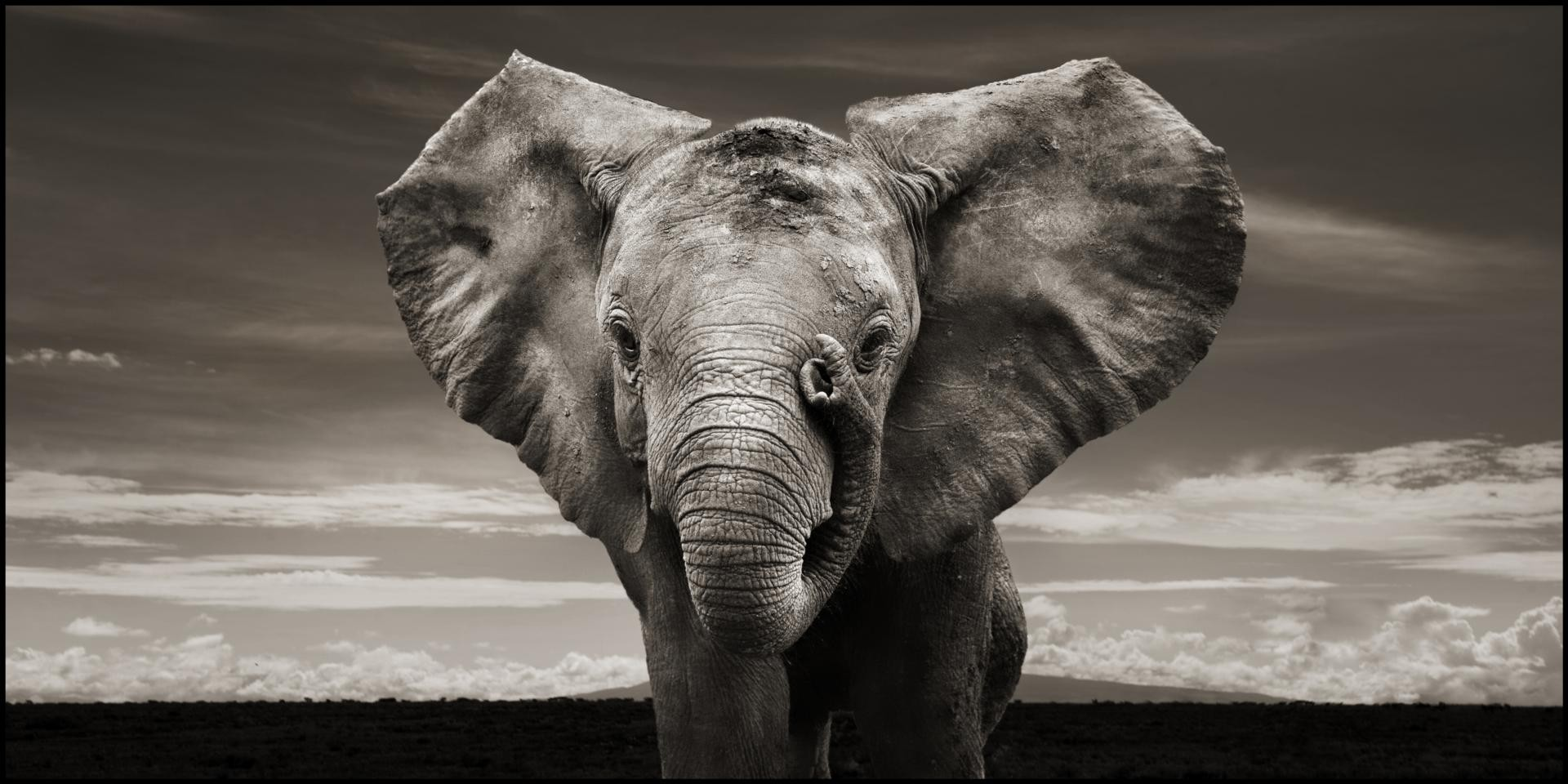 black and white photography Elephant Wallpaper HD Desktop 1920x960