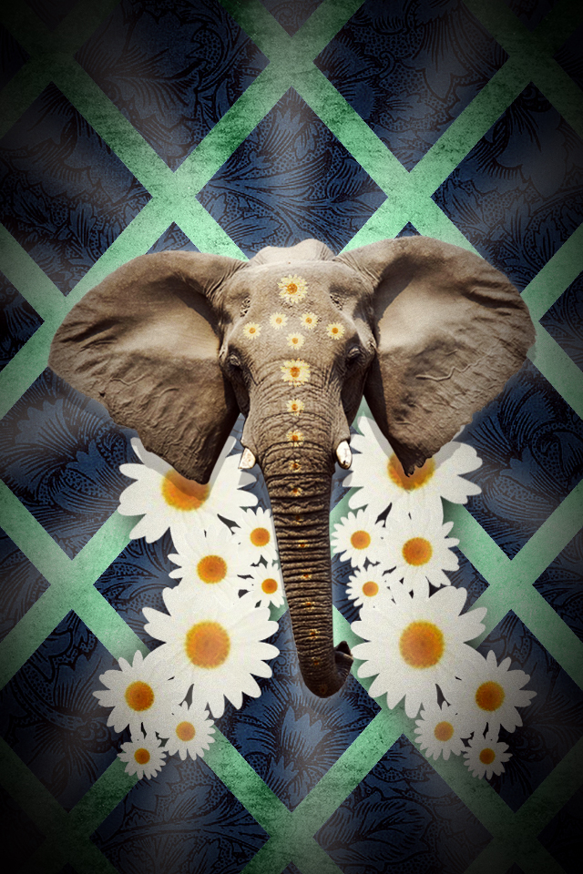 Elephant wallpapers for iphone 19 wallpapers adorable - Elephant background iphone ...
