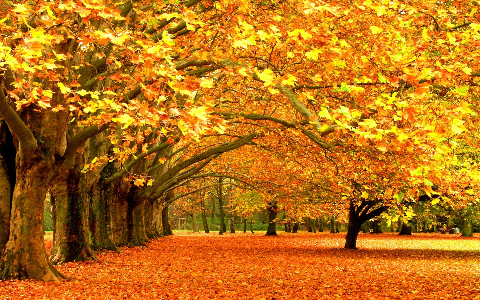 fall themed desktop backgrounds 43 wallpapers