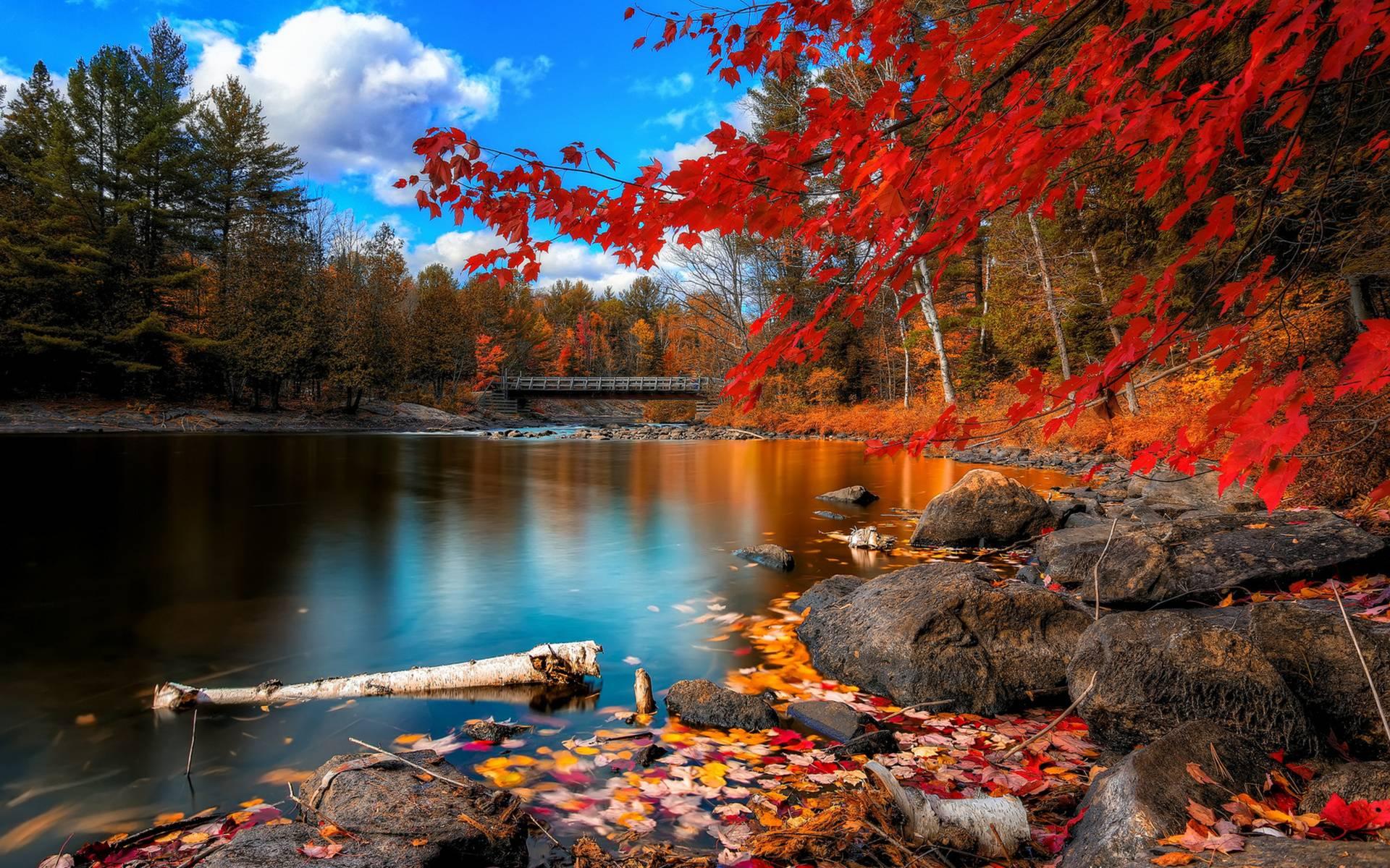 fall themed desktop backgrounds 011