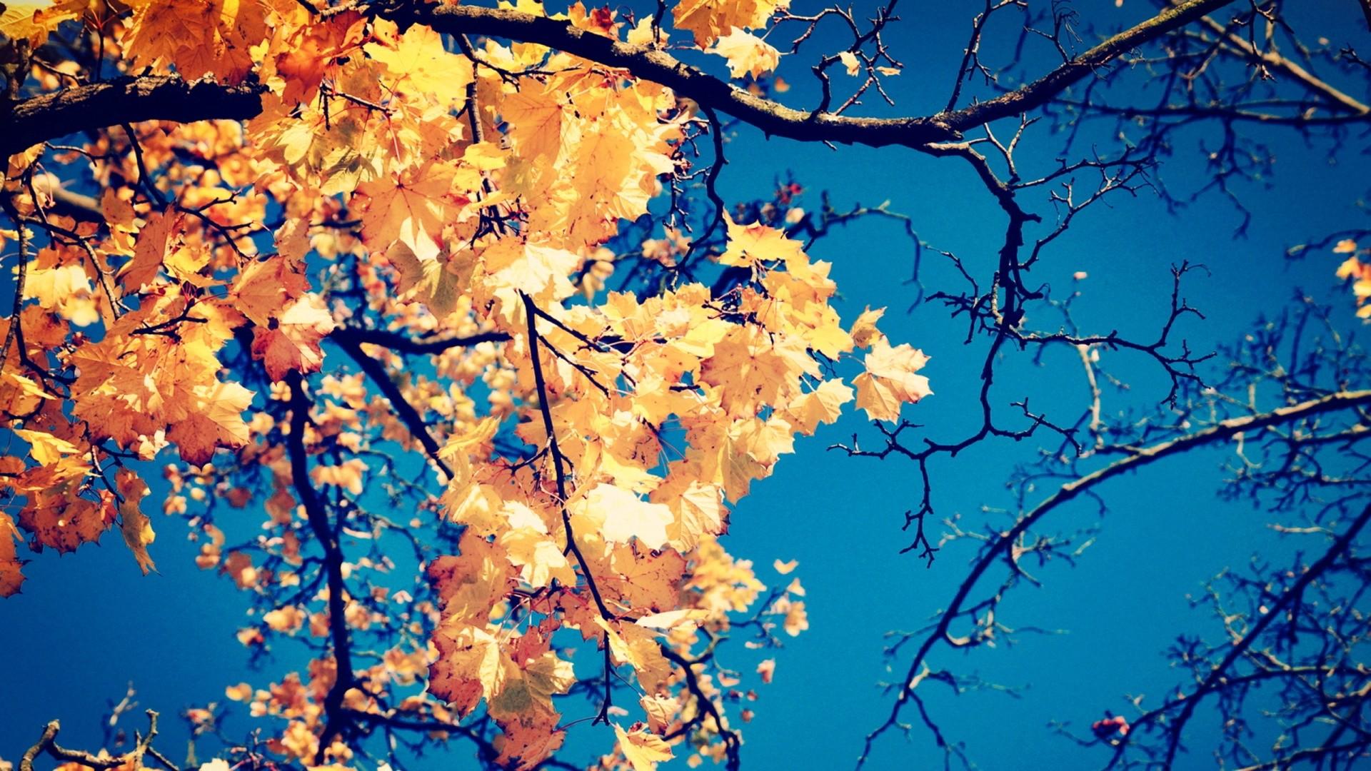 Pumpkin And Autumn Leaves K Hd Desktop Wallpaper For K Ultra Hd