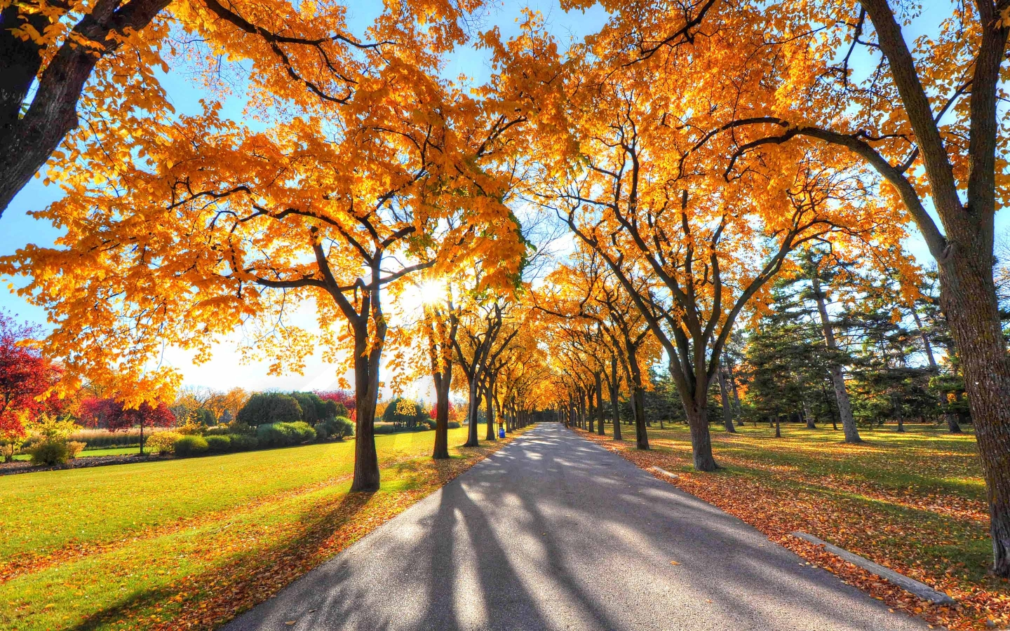 Park Landscape Autumn Mac Wallpaper Download Free Mac Wallpapers