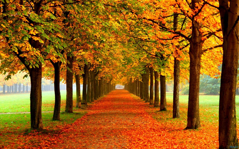 Autumn Widescreen Wallpapers Hd Desktop Backgrounds X