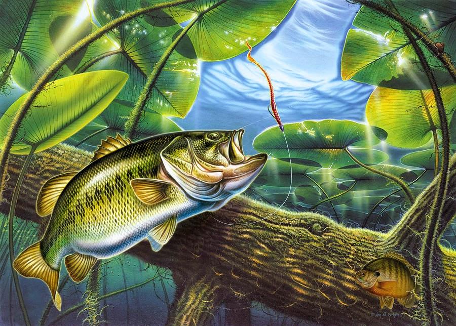 Wallpaper Fly Fishing Wallpaper Desktop 900x644