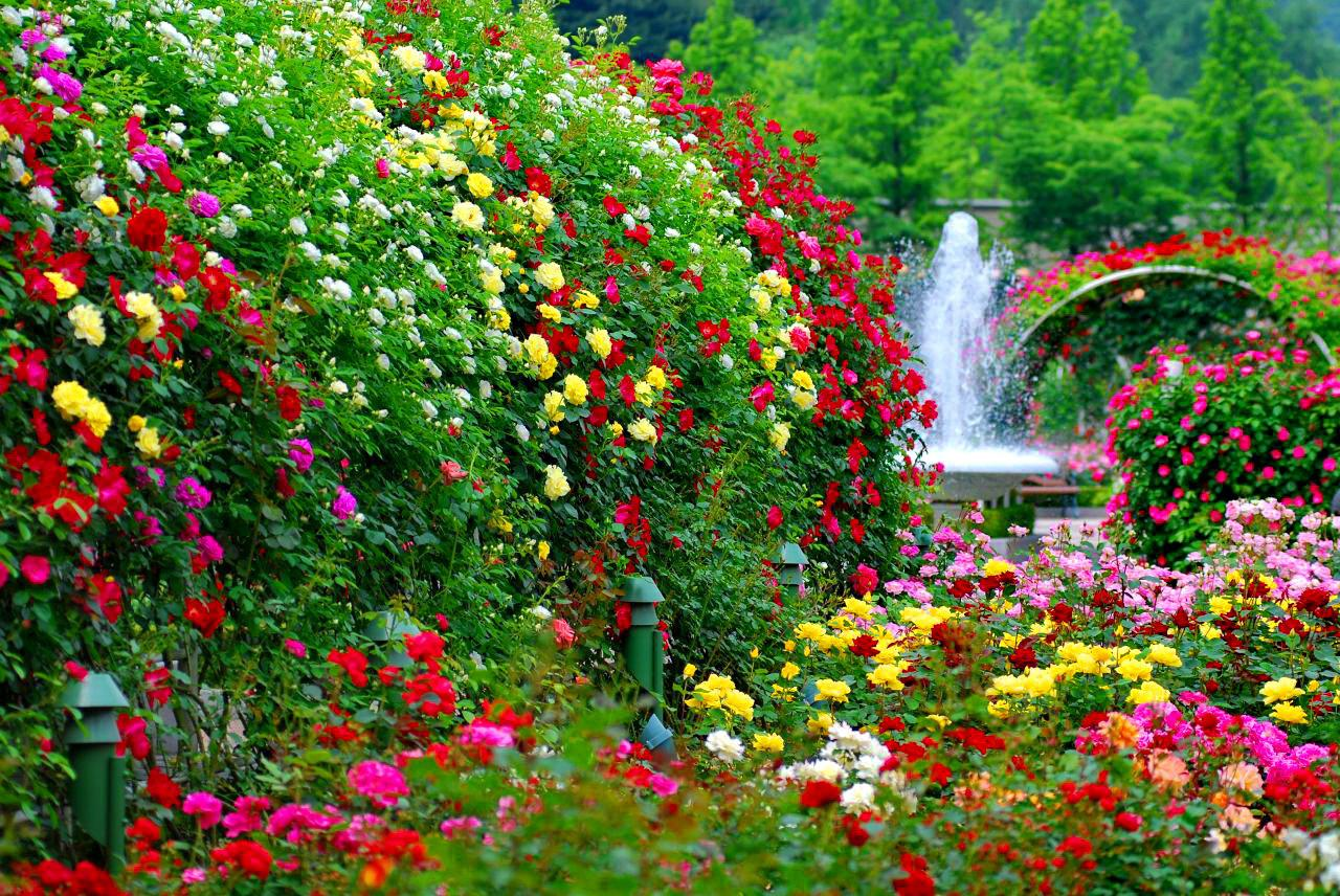 flower garden backgrounds homify garden design - Garden Flowers