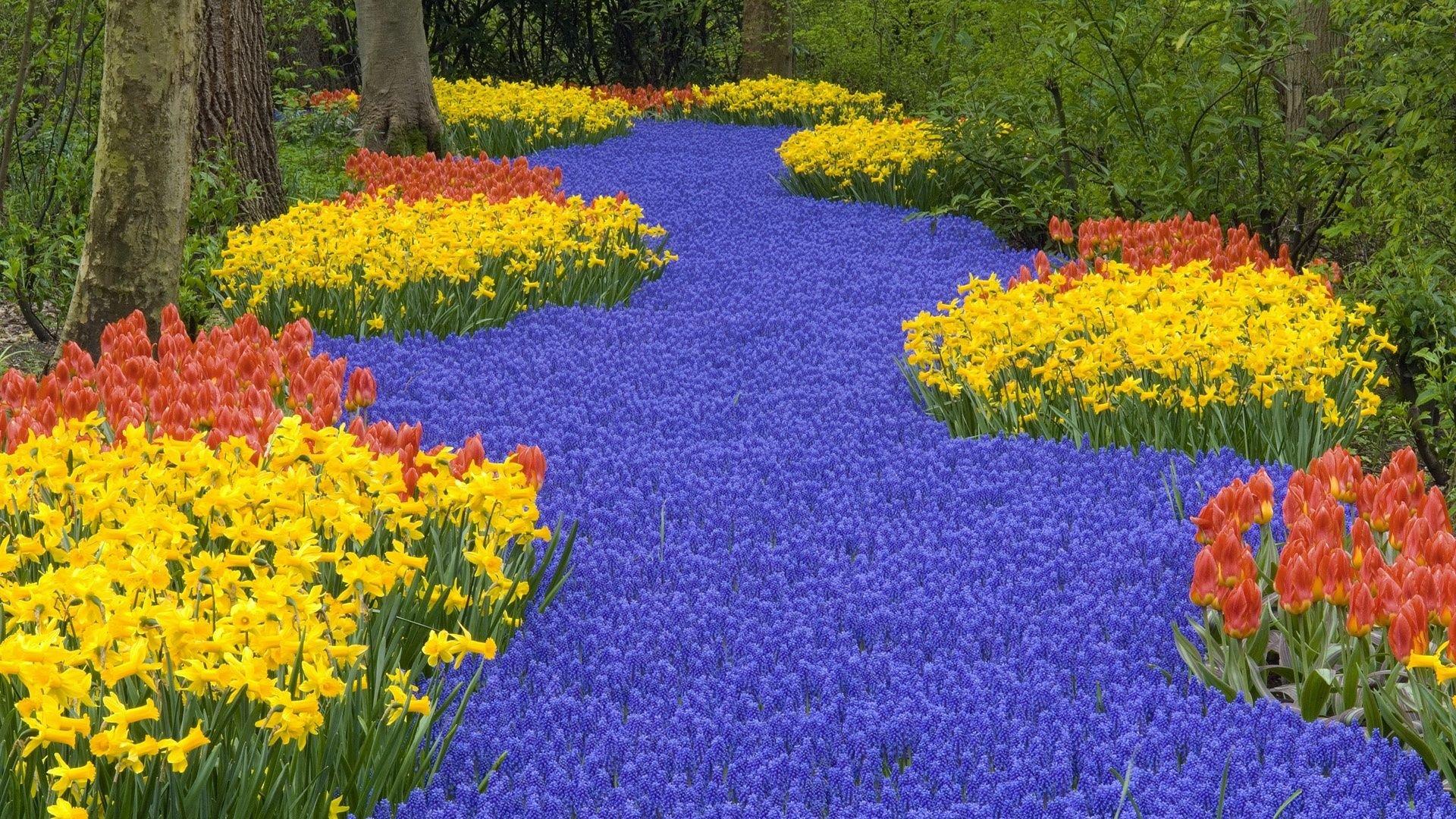 Hd Flower Garden Wallpaper 1920x1080
