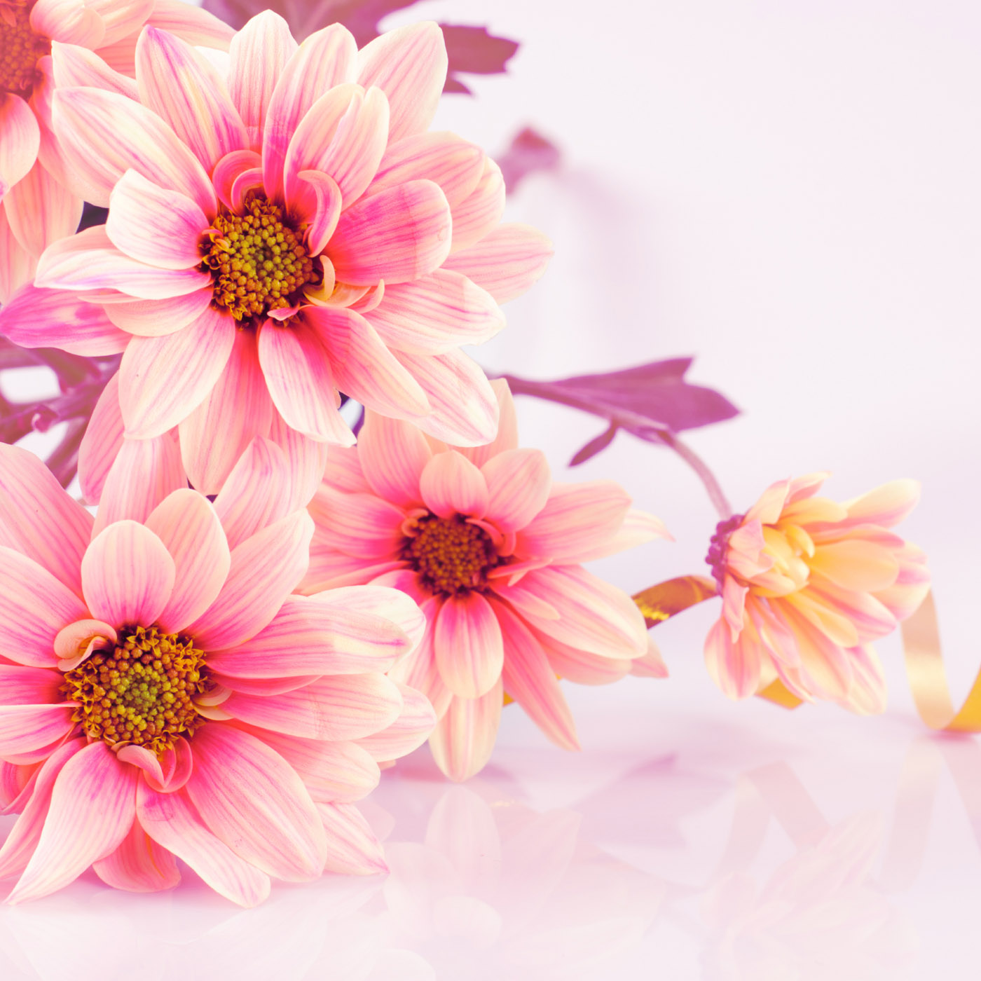 Flower Pics Wallpapers (23 Wallpapers)