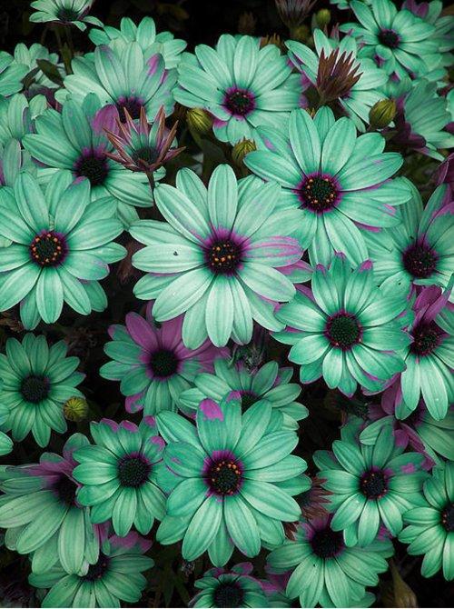 Flower Wallpaper Tumblr 50 Wallpapers Adorable Wallpapers