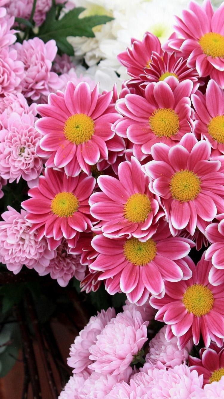 Iphone Plus Purple Flower Wallpaper The Best Flowers Ideas 750x1334