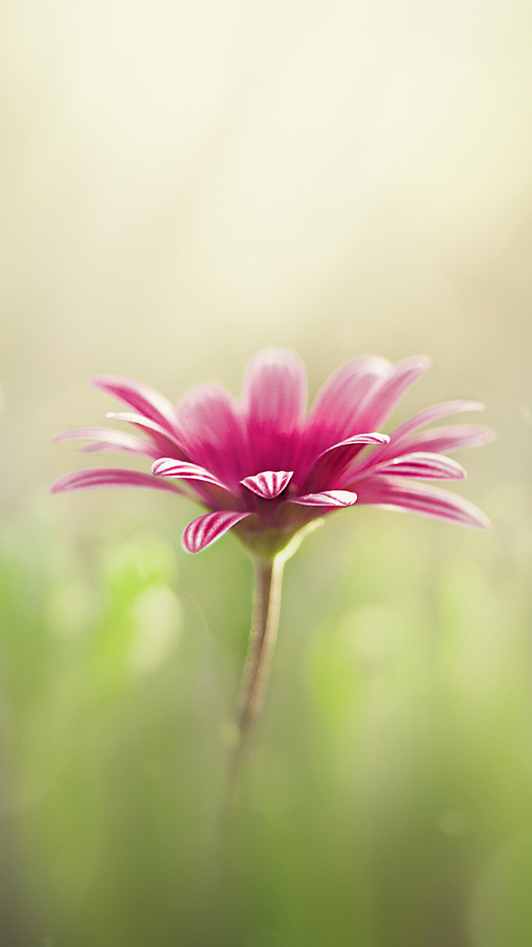 iphone flower wallpaper flower iphone backgrounds 38 wallpapers adorable 1619