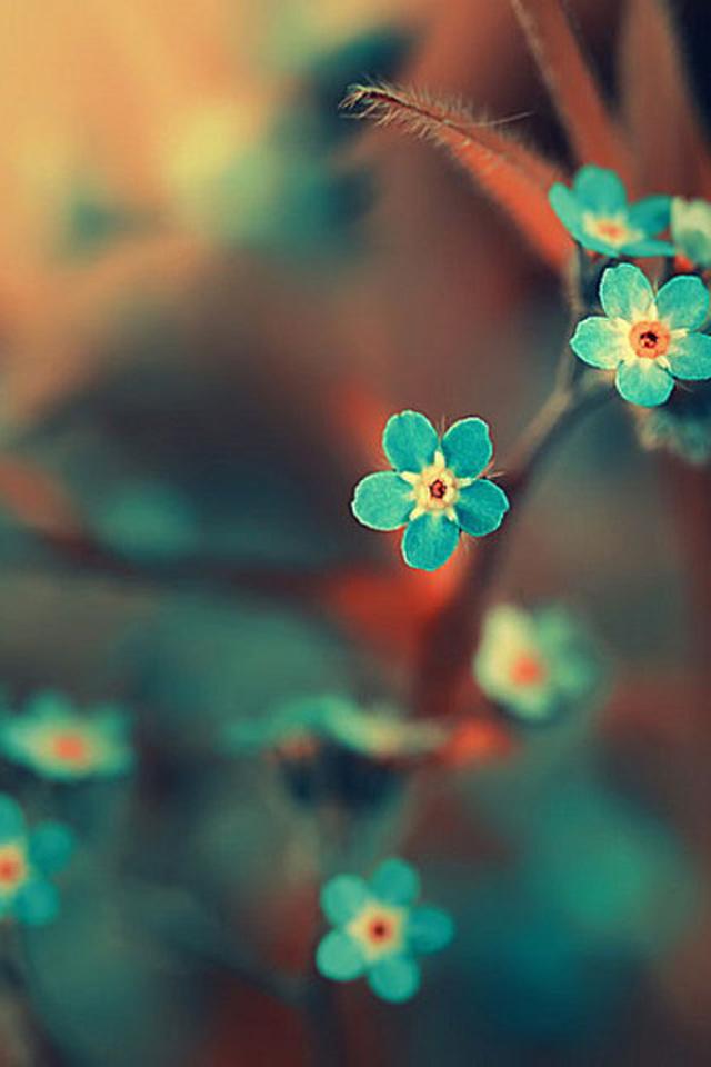 картинки на аву для айфона цветы листовки написаны