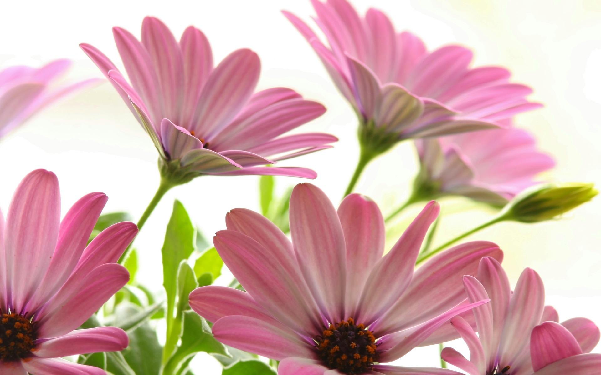 Wallpaper Nature Flowers Live Adsleaf