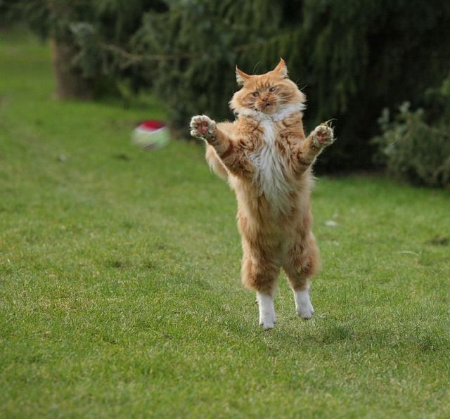 funny animal pictures wallpapers 69 wallpapers