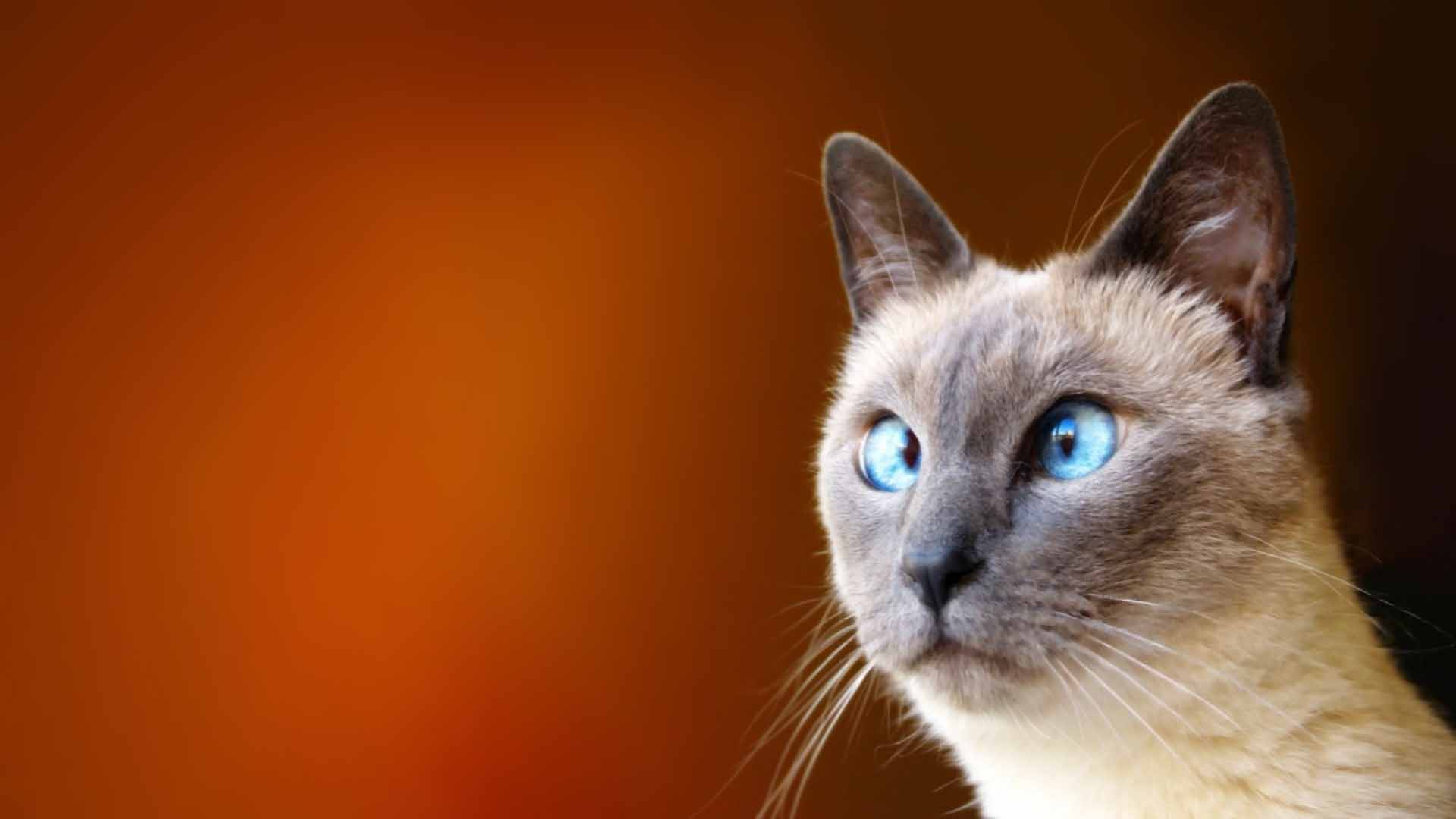Funny animal backgrounds wallpaper 1920x1080 sciox Gallery