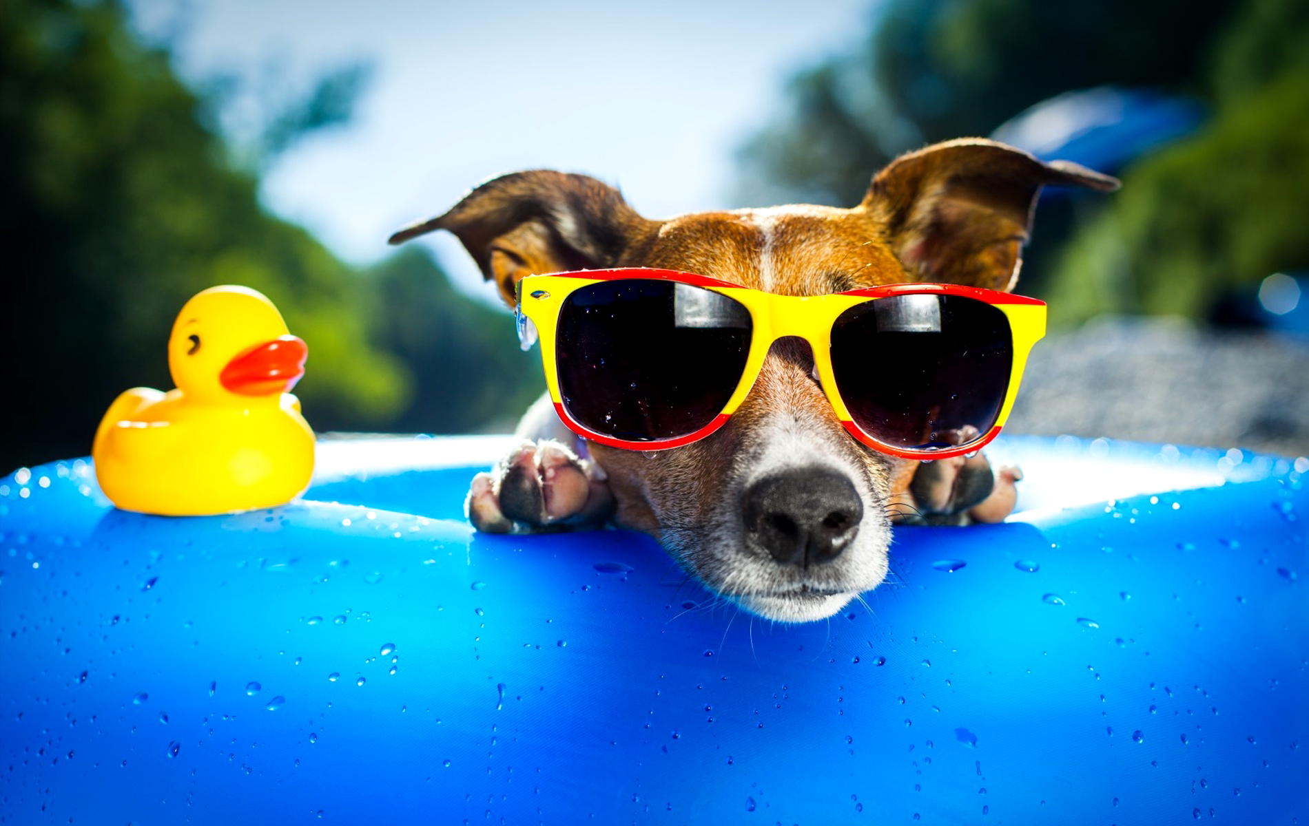 funny dog picture wallpapers 67 wallpapers � adorable