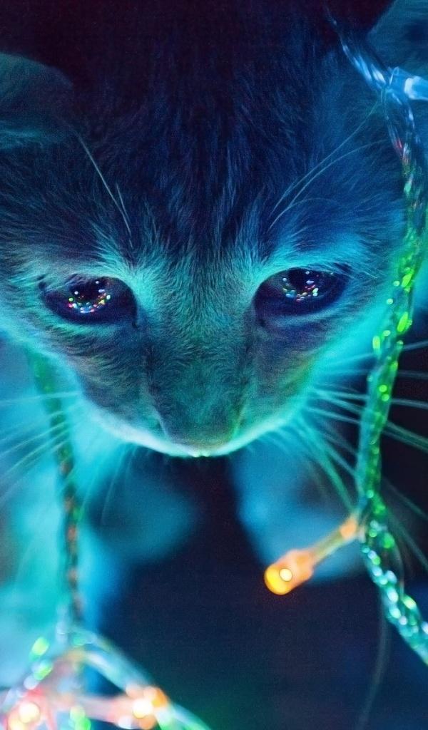 Galaxy Glasses Cat Wallpapers Best Hd Wallpaper