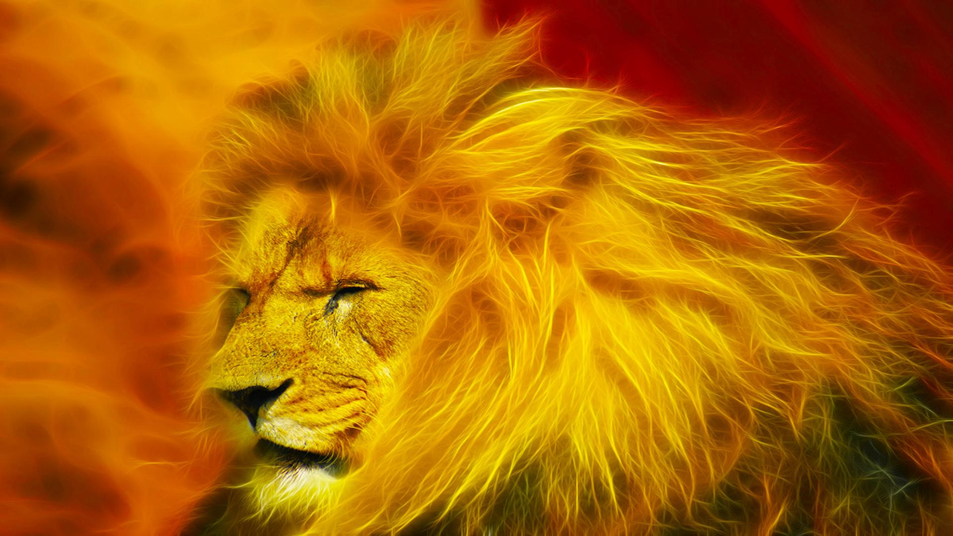 HD Lion Wallpapers 032