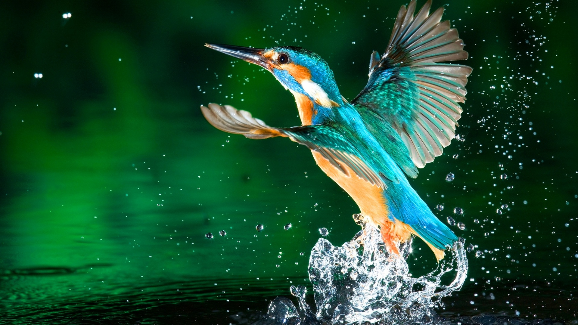 Best Amazing D Animated Hd Wallpapers Techblogstop 1920x1080