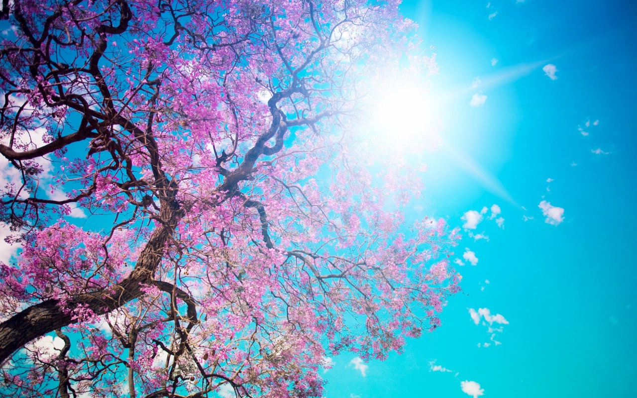 HD Spring Wallpapers and Photos  View FHDQ Wallpapers 1280x800