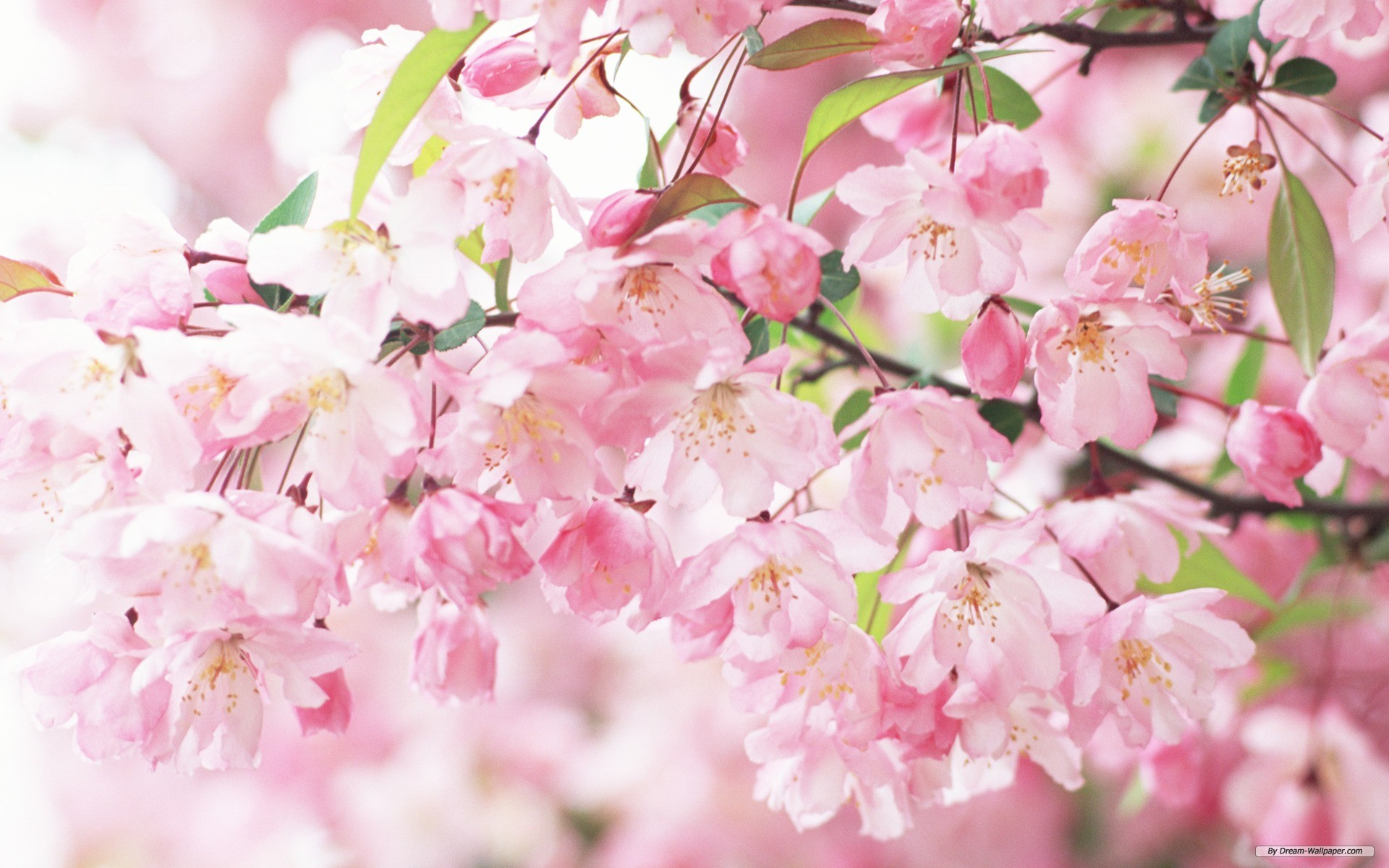 Popular Wallpaper High Resolution Flower - High-Resolution-Flowers-Wallpapers-019  Pictures_869969.jpg