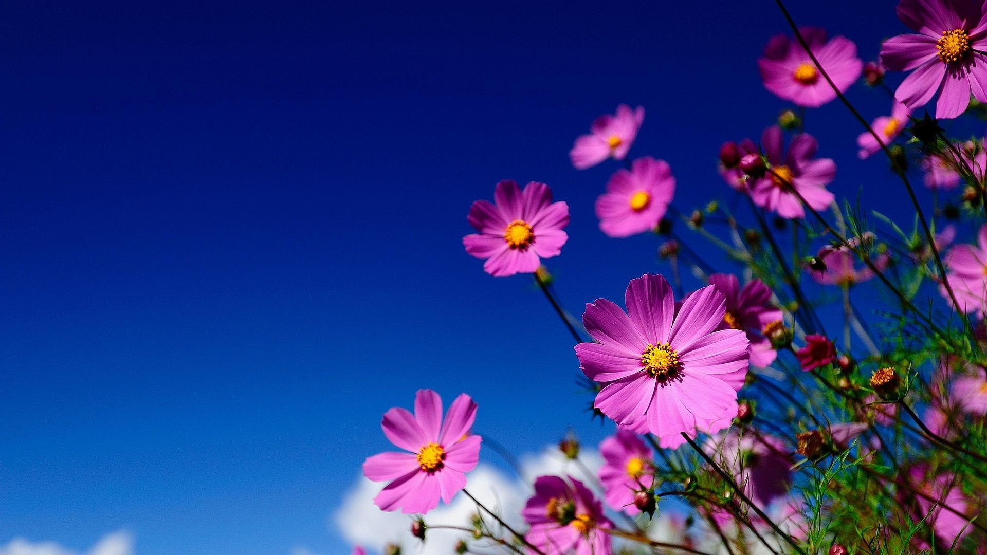 High Resolution Flowers Wallpapers 030