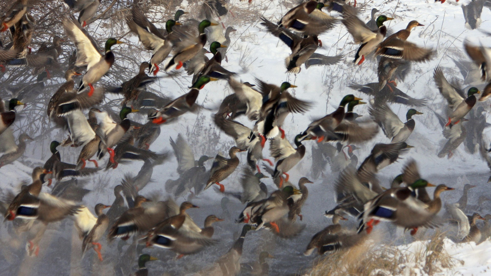 duck hunting camo backgrounds - photo #14