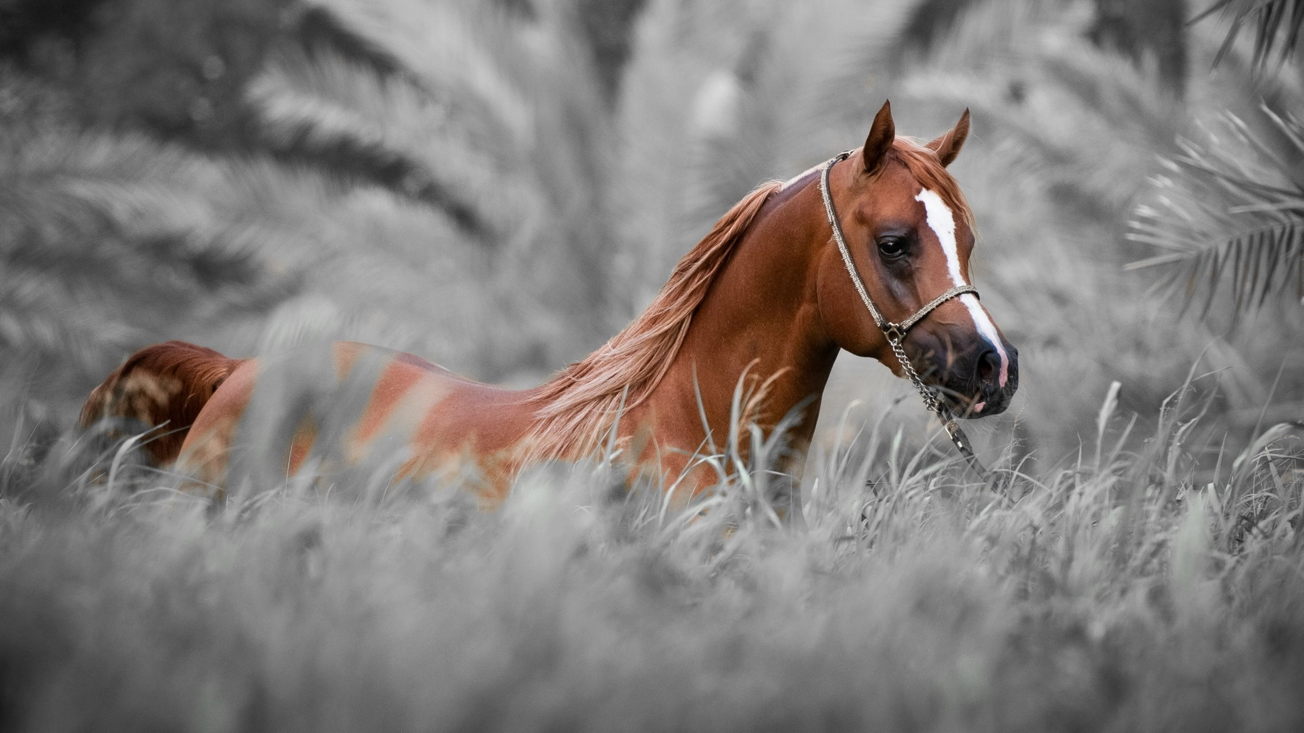 images of horse wallpapers 40 wallpapers