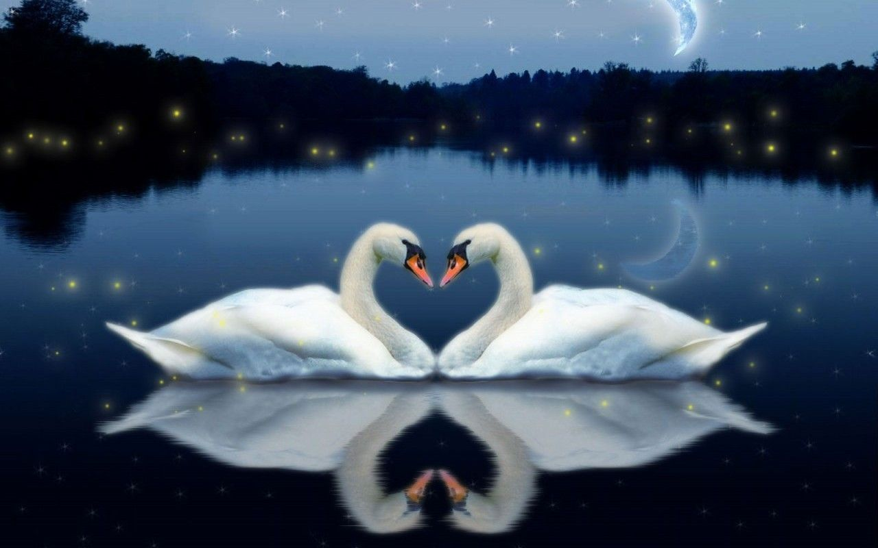 Love Birds Live Wallpaper  Android Apps on Google Play 1280x800