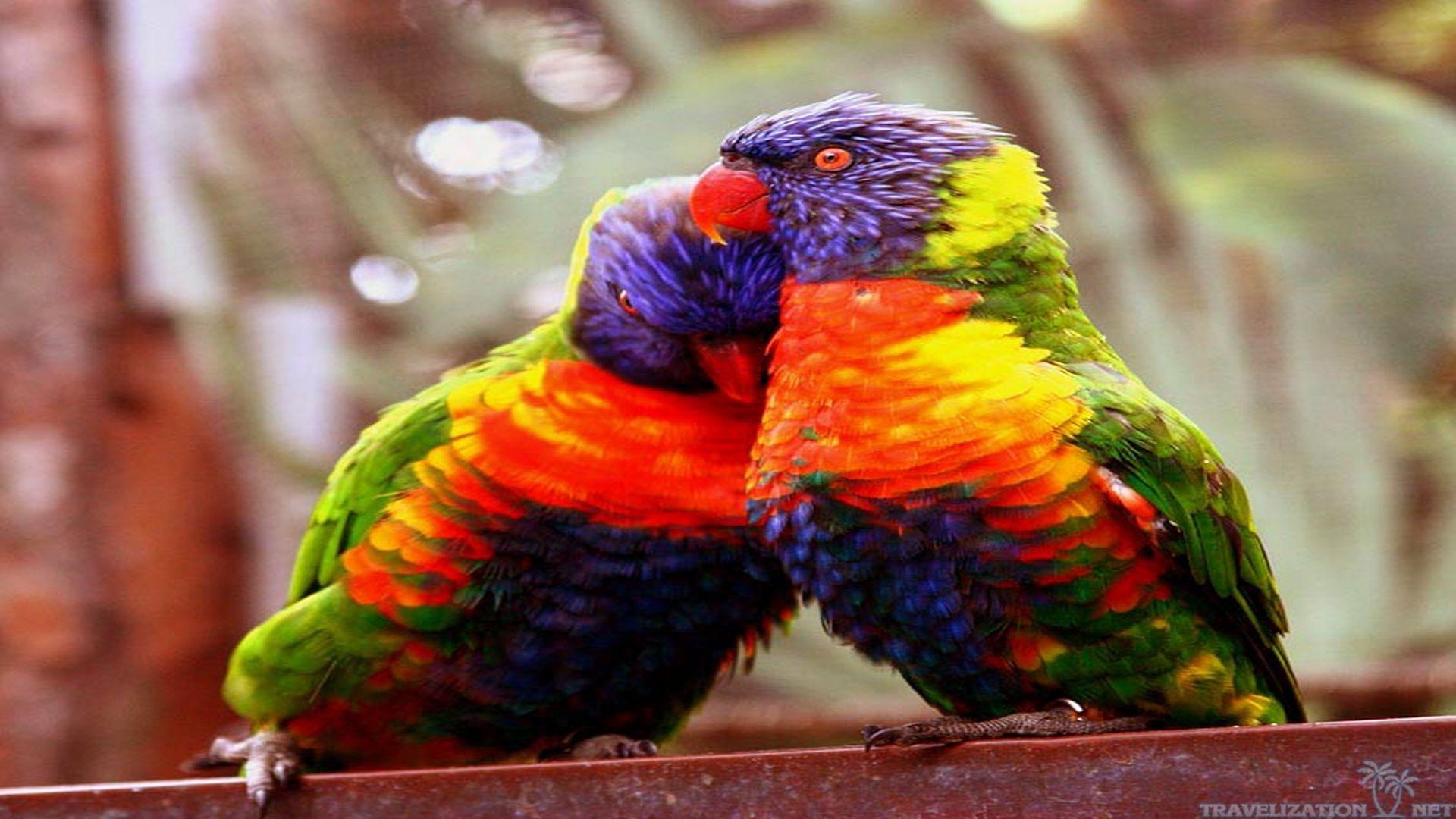 Wallpapers Love Birds Desktop Wallpapers: Images Of Love Birds Wallpapers (61 Wallpapers)