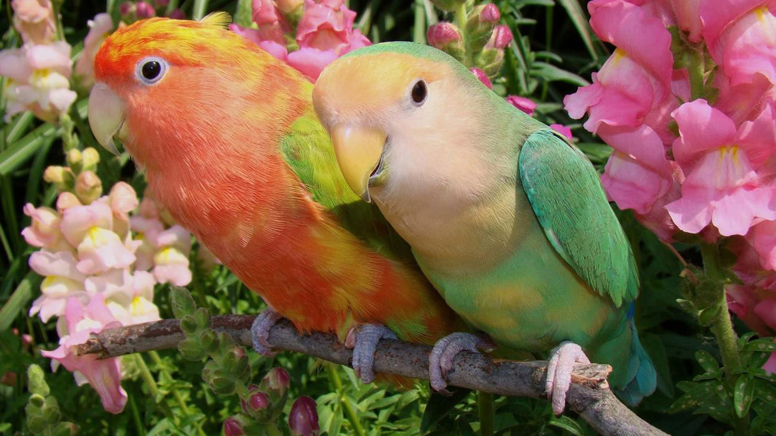 Love Birds Images Collection  2560x1440