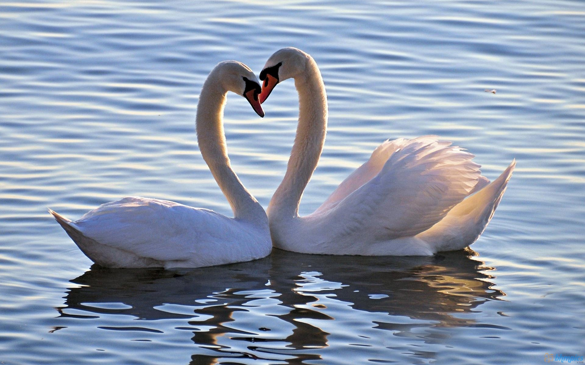 images of love birds wallpapers (63 wallpapers) – adorable wallpapers