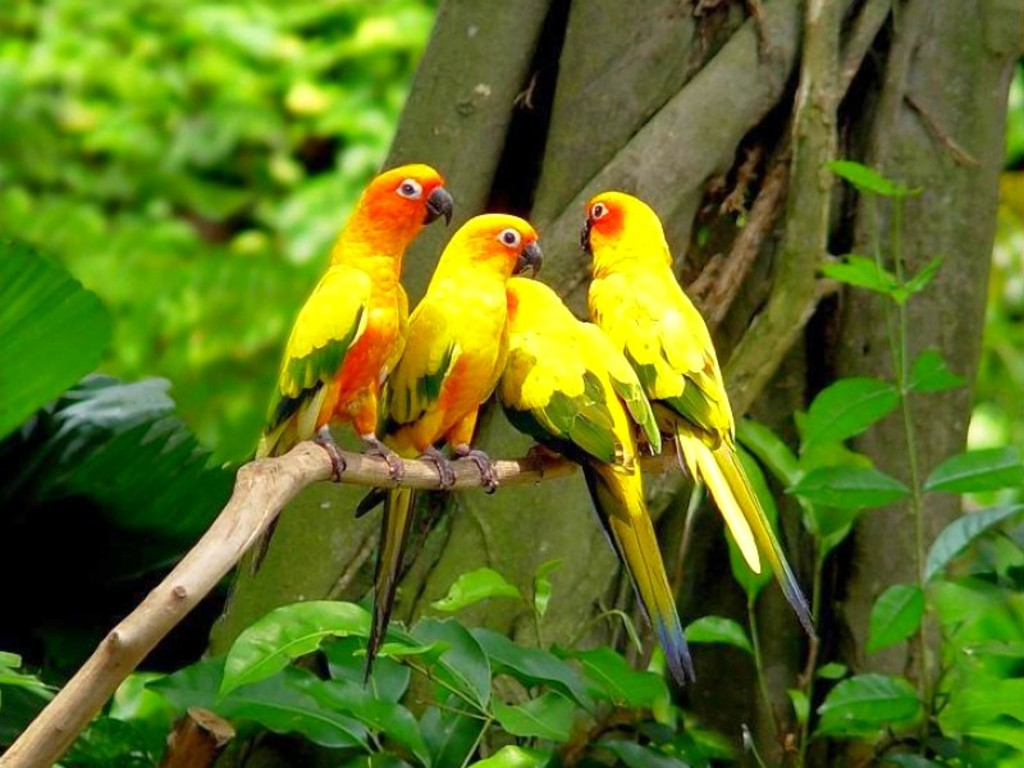 Picture orange yellow parrot HD Animals Wallpapers