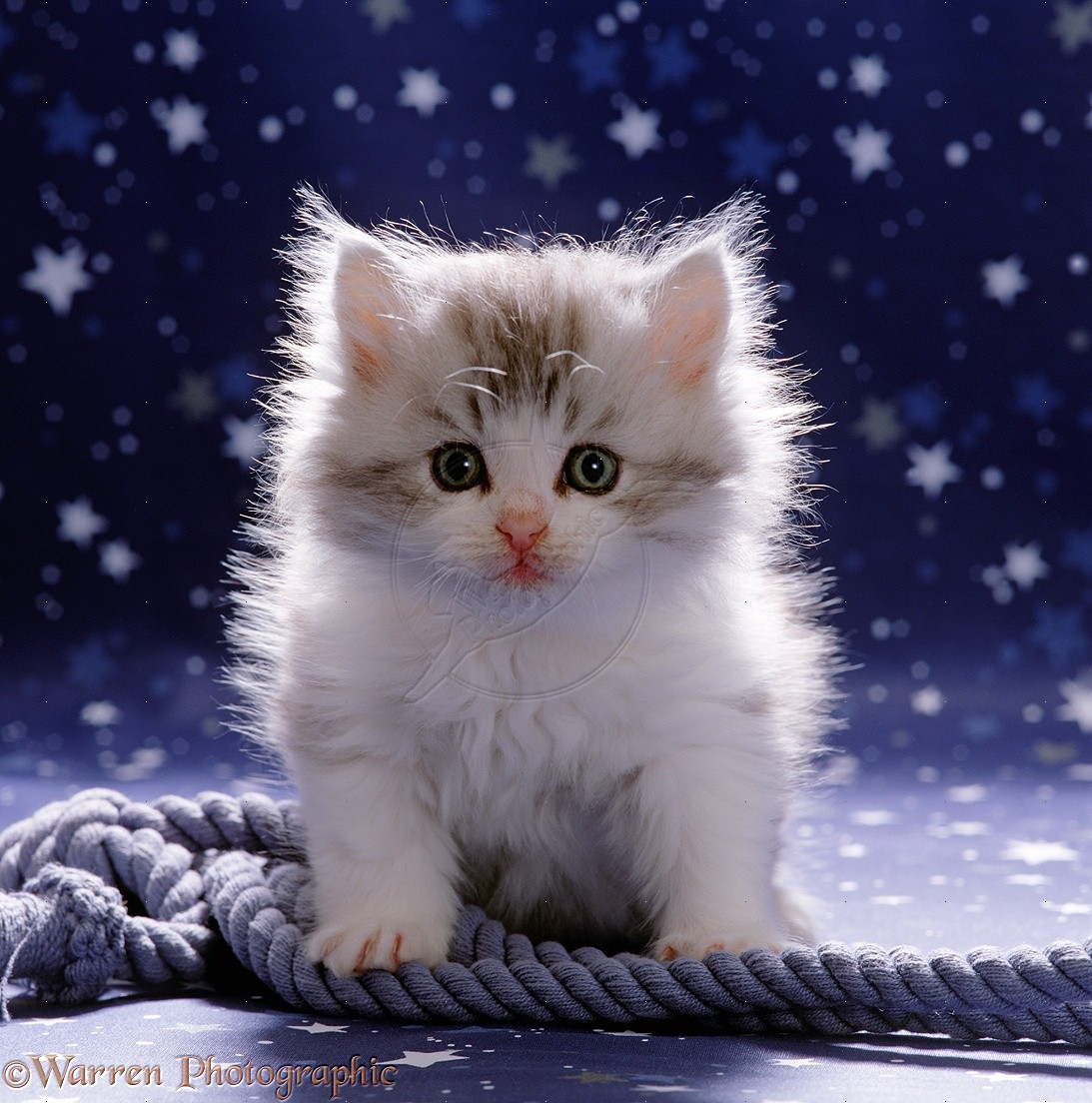Kitten Wallpapers Android Apps on Google Play 1093x1104