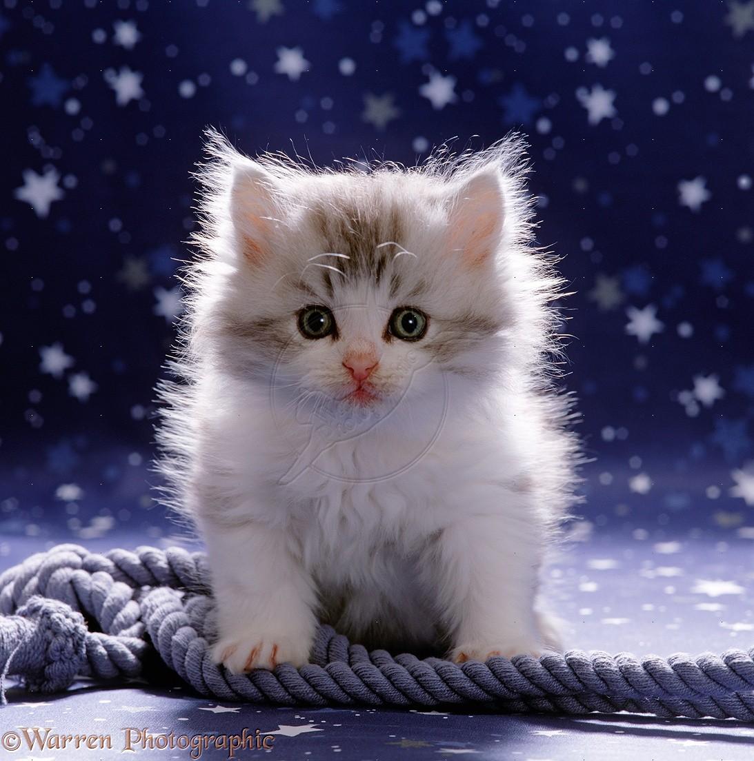 Kitten Wallpapers 33 Wallpapers – Adorable Wallpapers