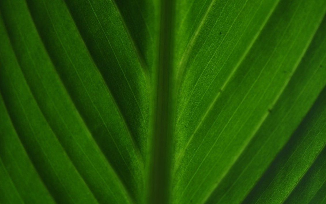 Green Leave Wallpaper · GL Stock Images 1131x707