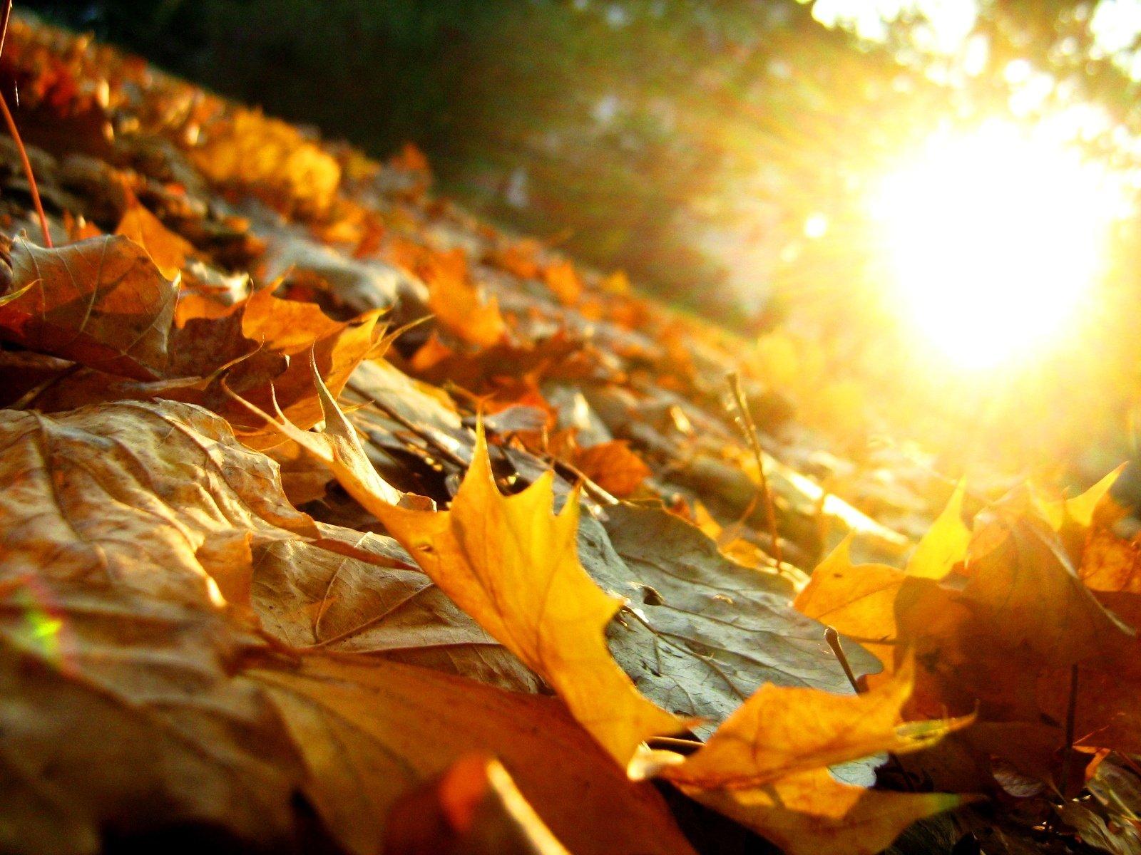 блюз опадающих листьев картинки свинины, курицы, говядины